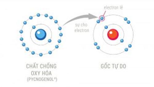 Sự bù đắp electron của chất chống oxy hóa cho gốc tự do